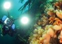 Norway opens up for dive tourism after COVID-19